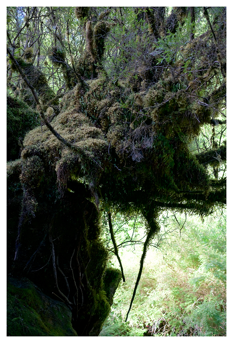image: Untouched Creature (Río Alcaldeo, Castro, Chiloé, Chile, 2019)